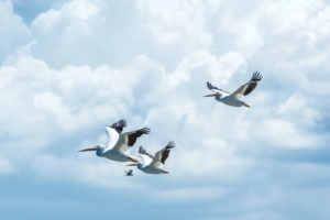 birds in a cloudy sky to describe moving to the future